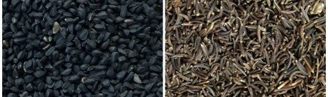 Nigella Seeds (Kalonji) v. Black Cumin